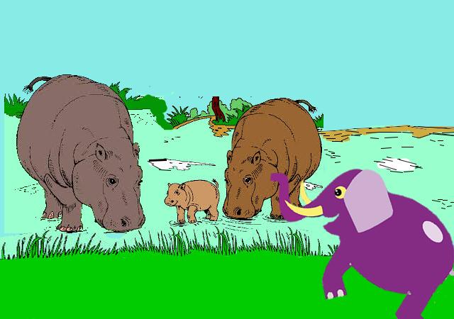 Nesha hippos