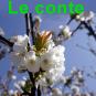 Sapinc2